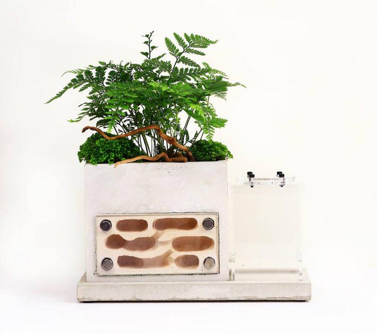 plantbuilding 1 螞蟻帝國